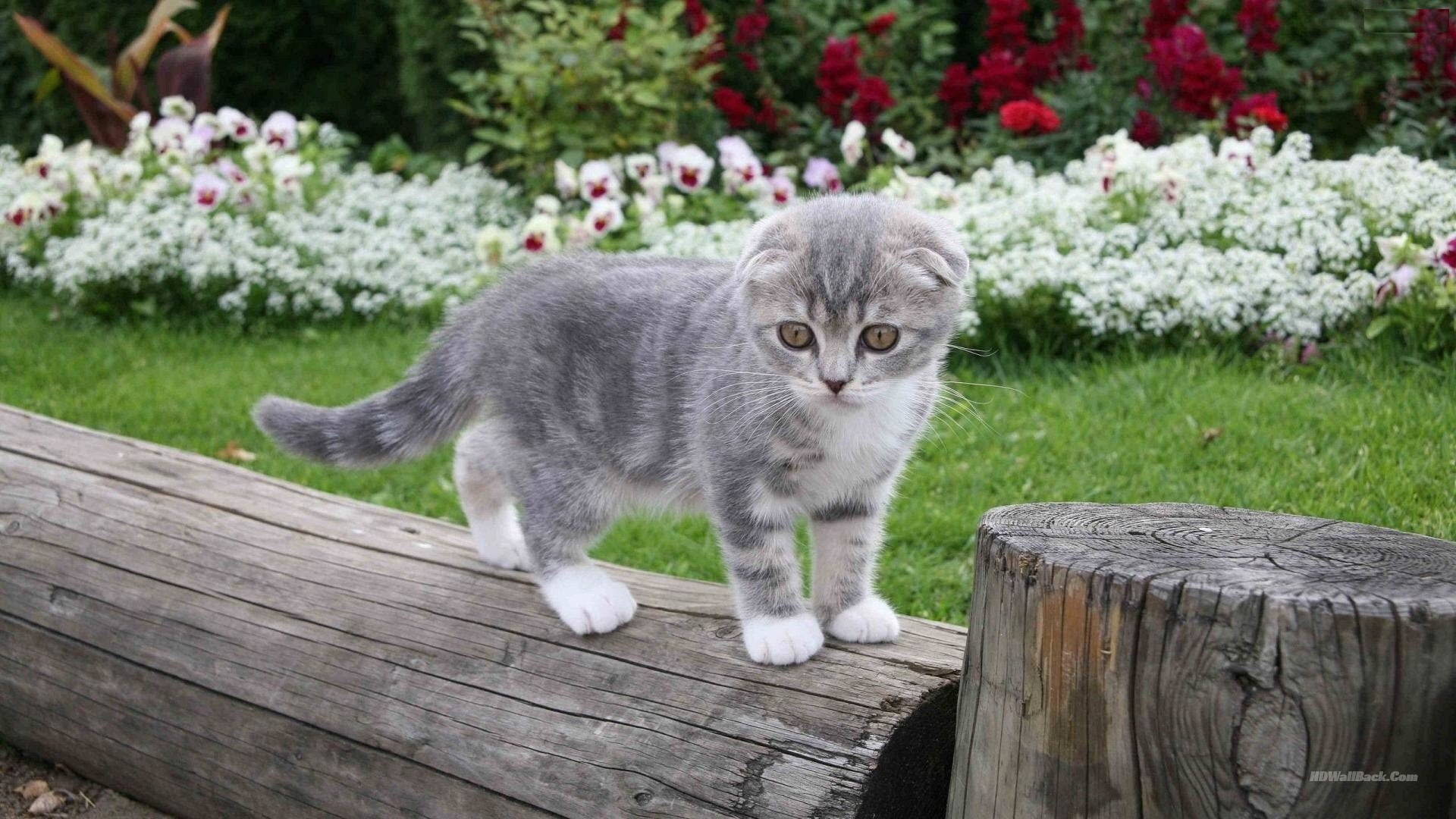 Free Cat HD Wallpapers Download