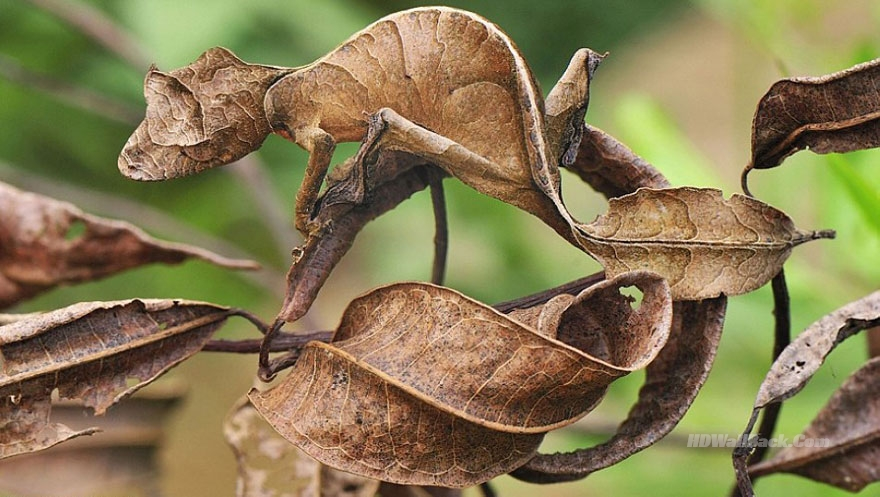 20 Amazing Examples of Animal Camouflage