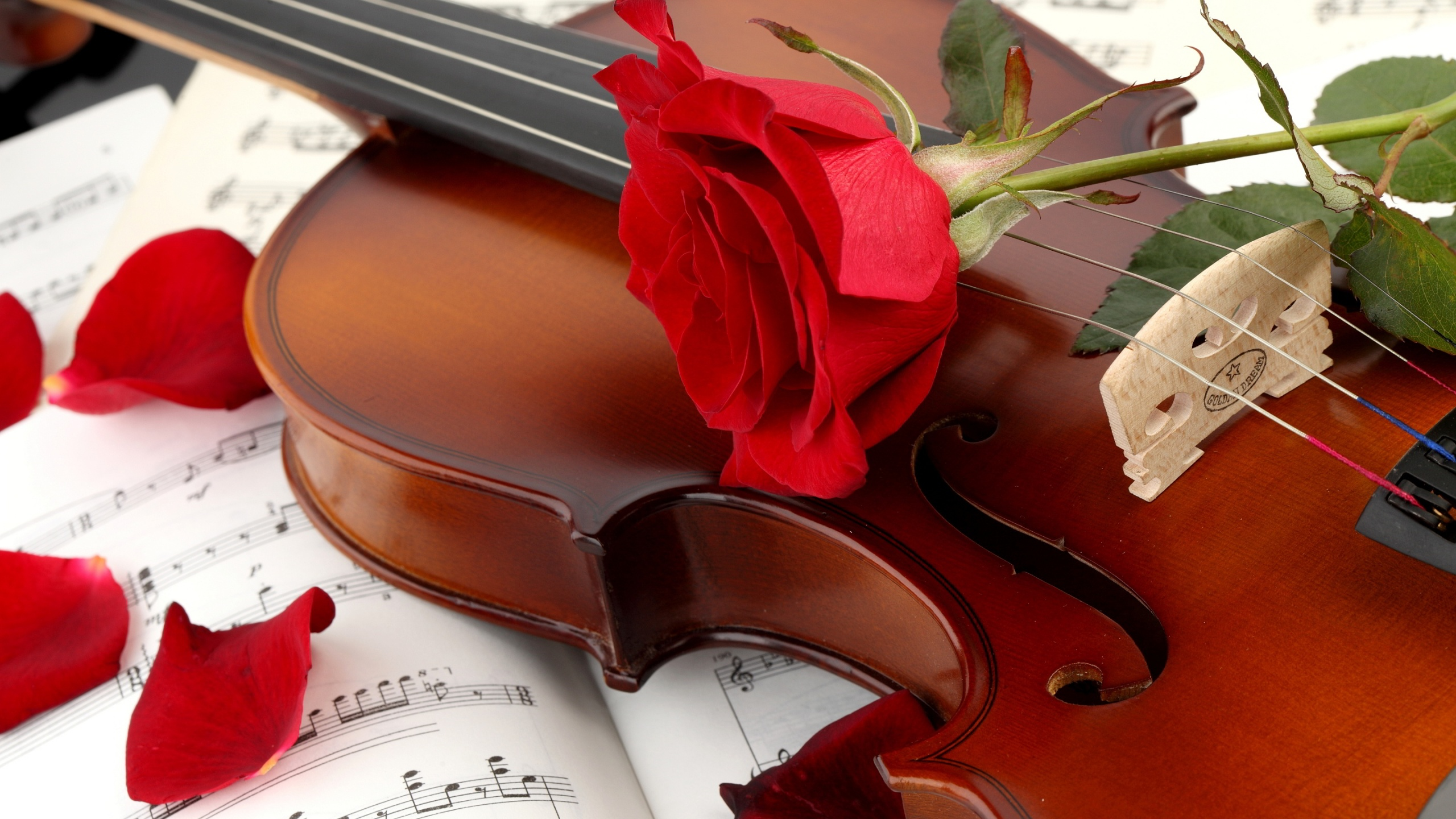 Red rose on a violin wallpaper
