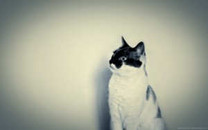 Hipster Backgrounds cats