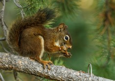 squirrel animal wallpapers