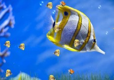 3D Fishes Windows 10 Wallpaper