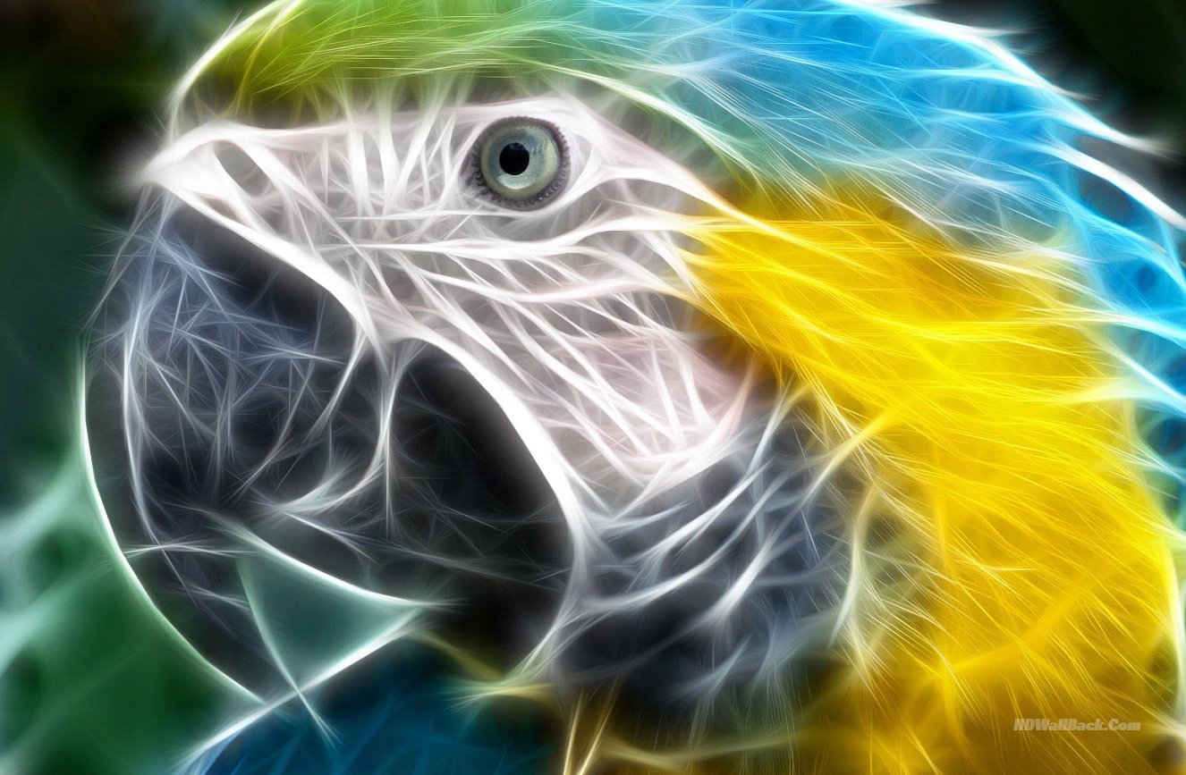 3D Abstract Macow Parrot
