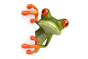 3D Green and Orange Frog Watching Animals Wallpapers