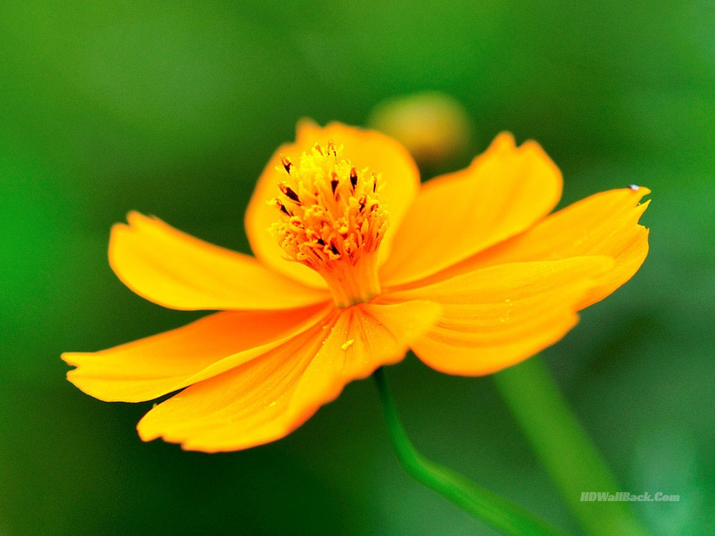 flower wallpaper yellow images