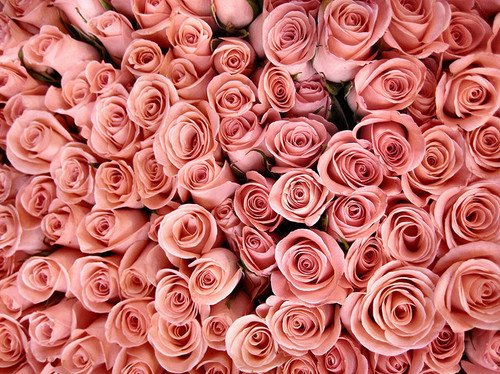 background flowers pink rose