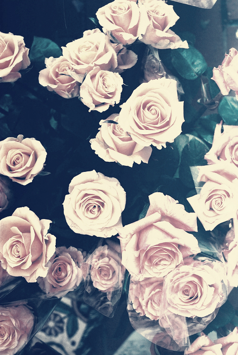 tumblr hd backgrounds rose