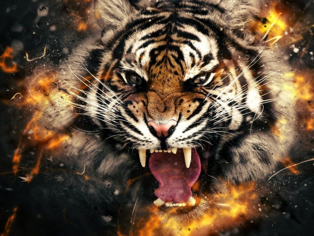 3d 4k tiger wallpaper  u2013 hd wallpapers   hd backgrounds