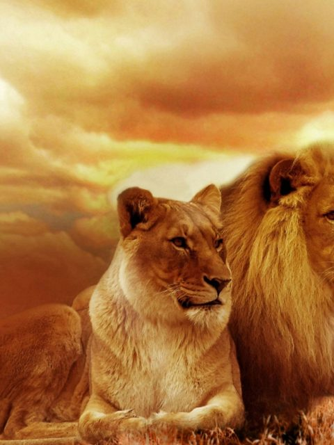 Beautiful Lion Hd Wallpapers Pictures Pc – HD Wallpapers ...