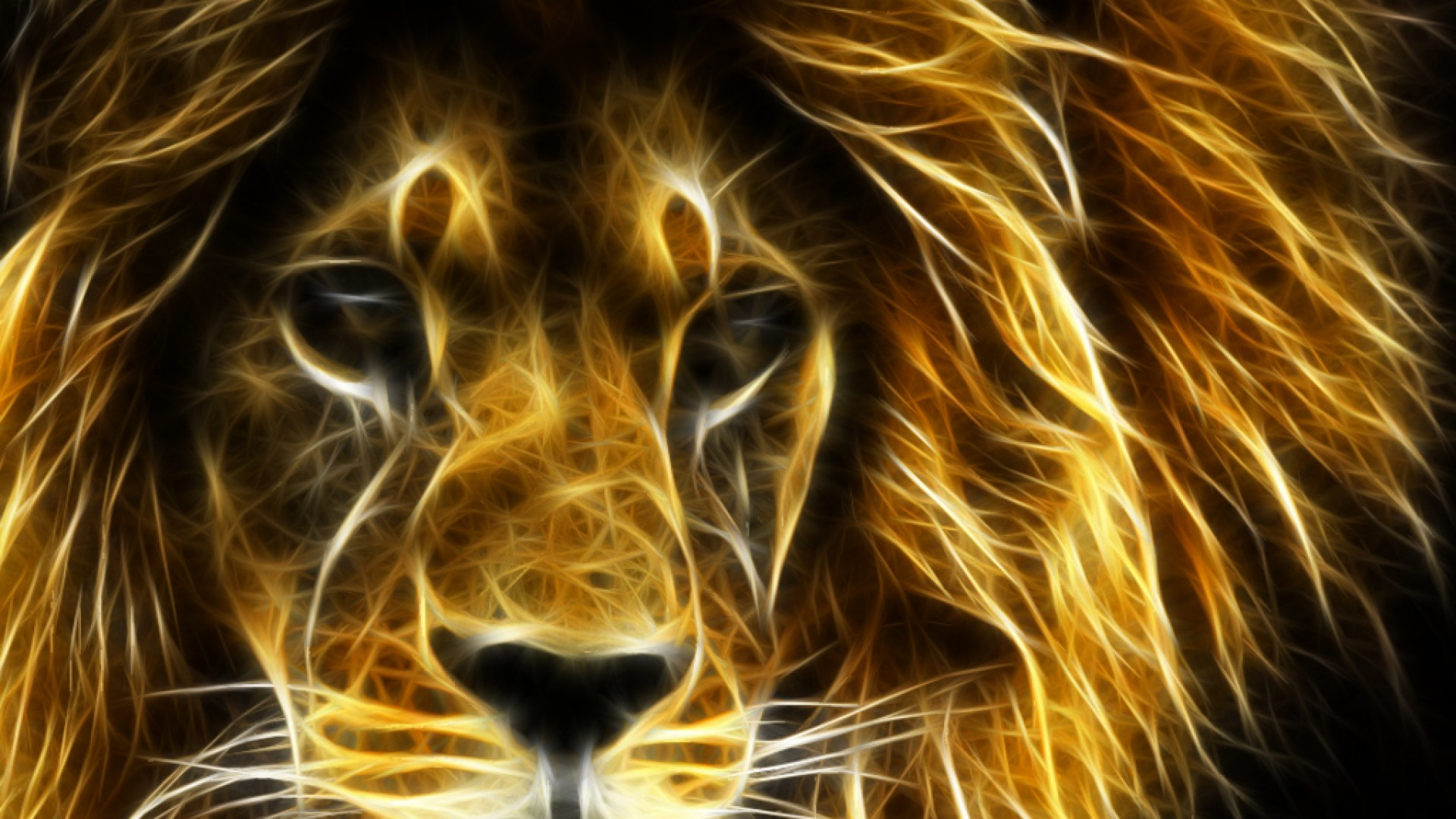 Lion Wallpapers 1920×1080