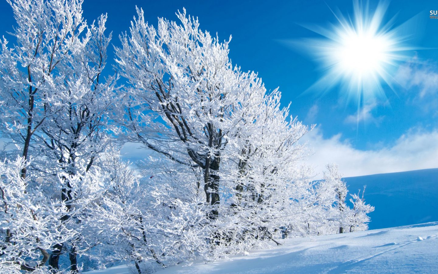 Winter wide wallpaper 1920 1080 hd wallpapers hd for 1080 by 1920 wallpaper