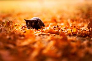 small black cat hd free wallpapers