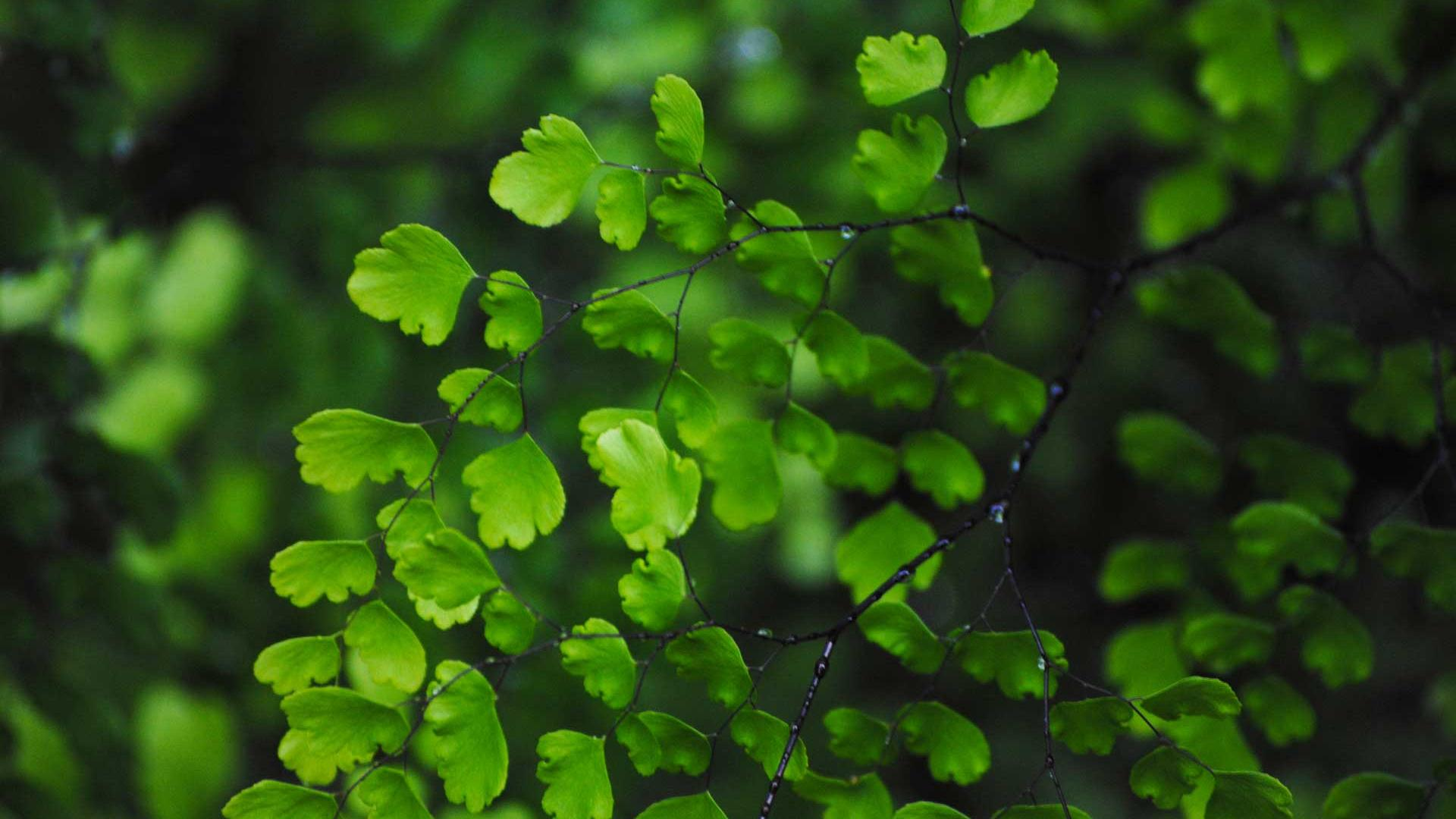 High Definition Green Leaves Wallpapers