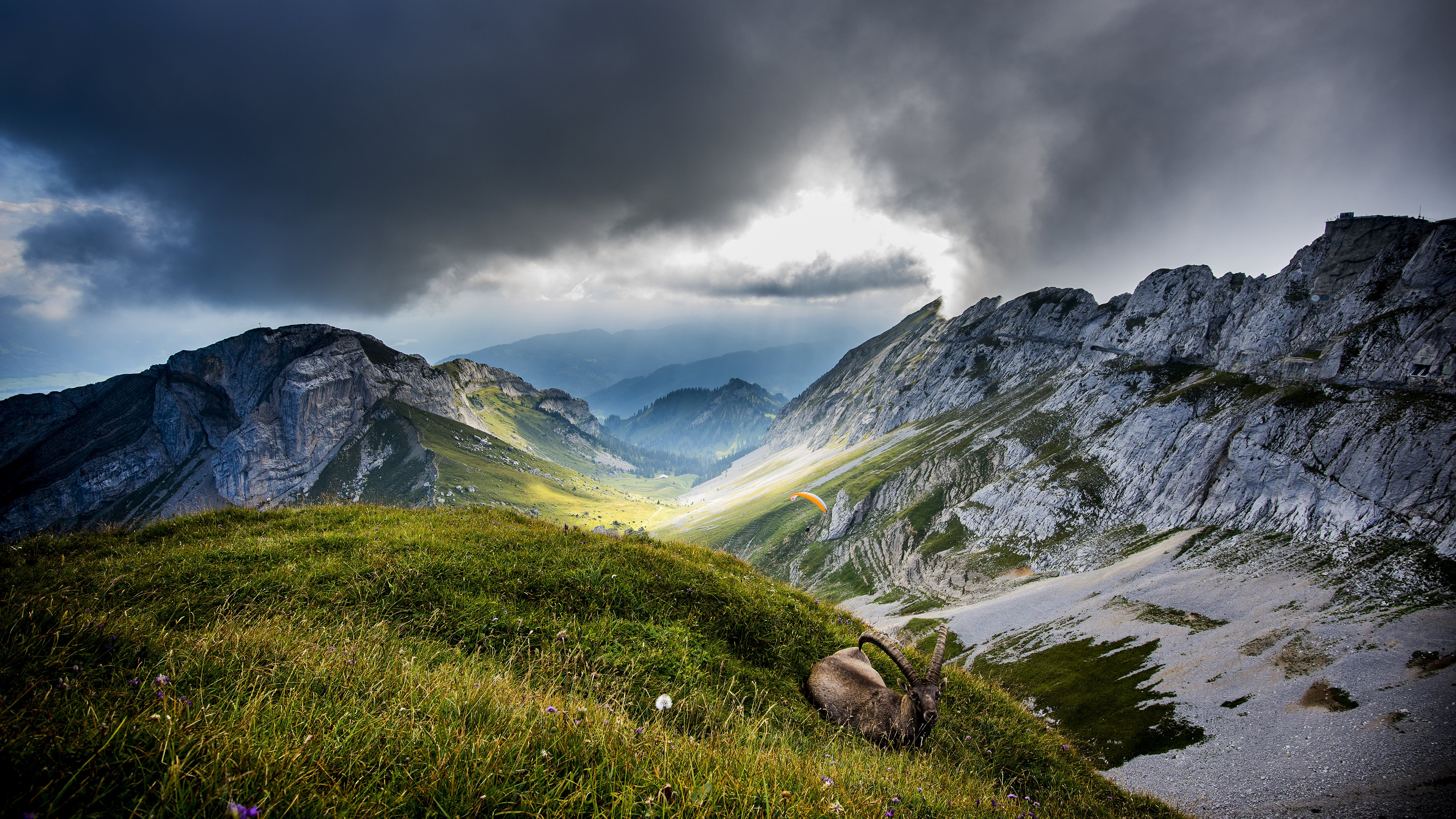 Ibex_at_Mount_Pilatus-ultra-HD