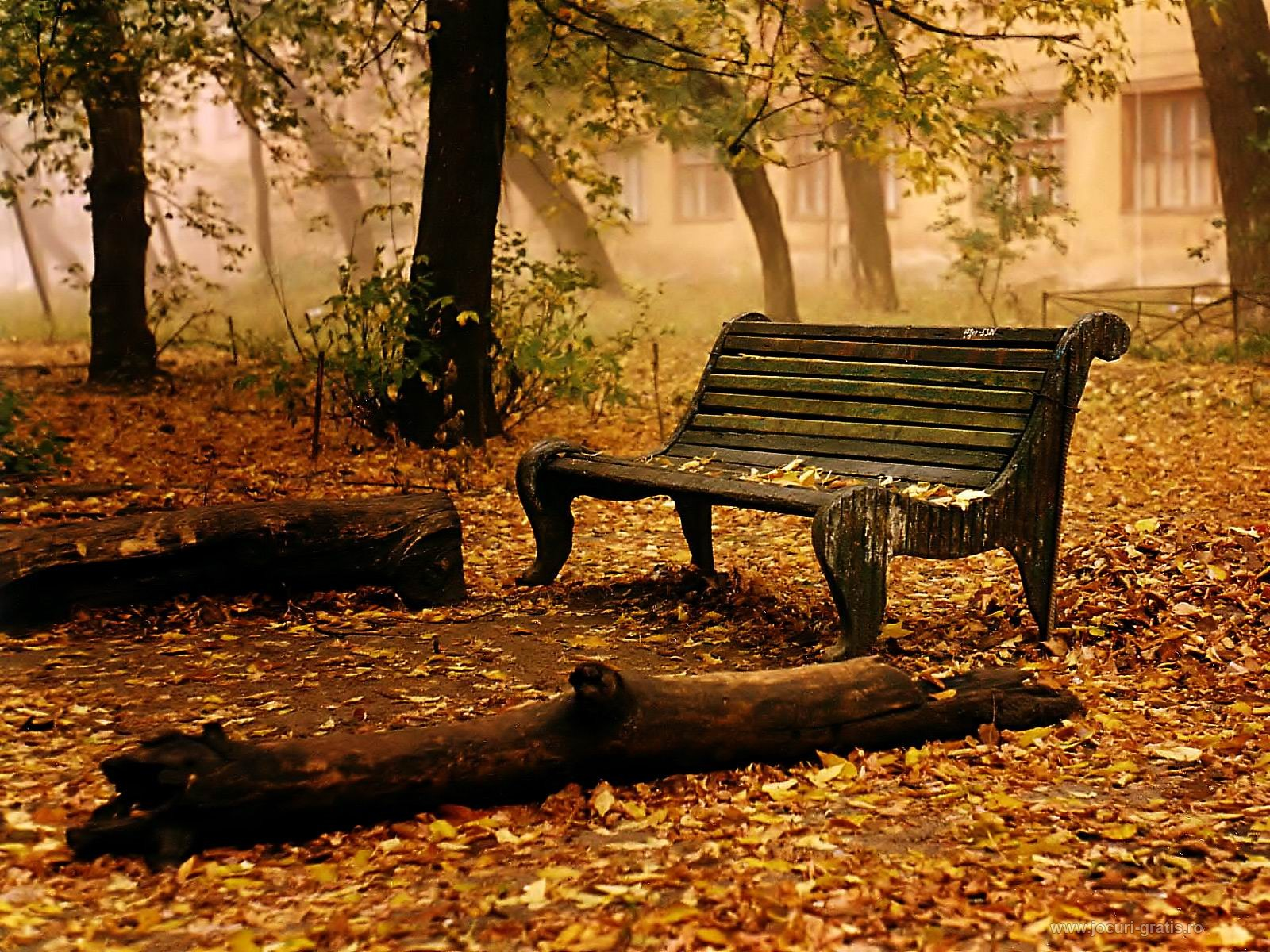 Cool Autumn Nature Wallpaper Picture