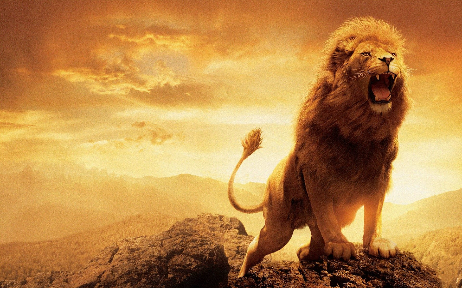 HD Lion Wallpapers Widescreen 1920×1200