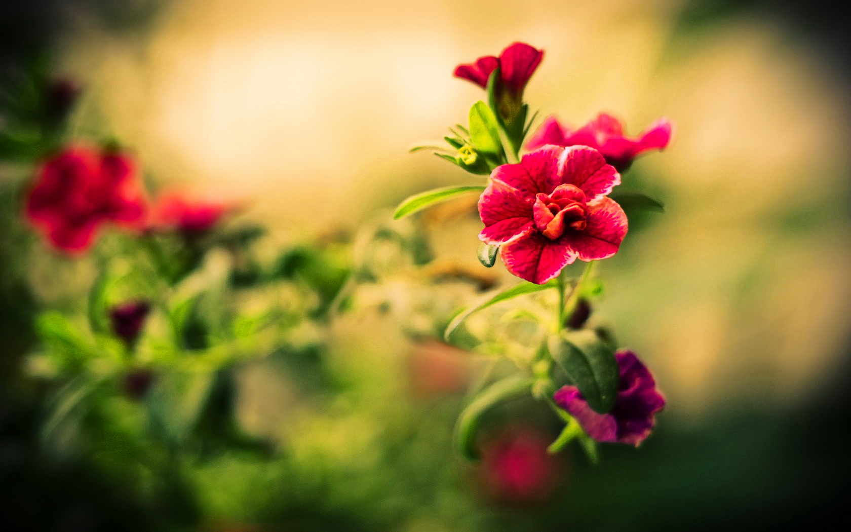 beautiful flower wallpapers