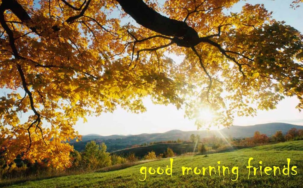 Good Morning Friends Nature