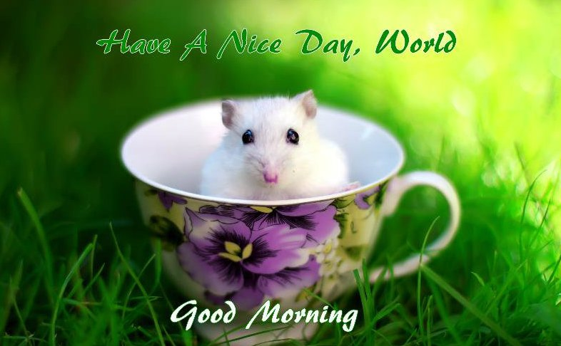good morning cup hd