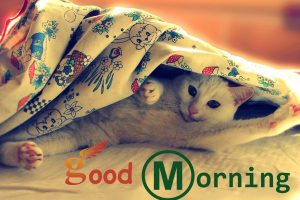 good morning whatsapp cats cute