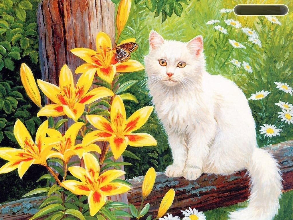 Cute Cat Photos Free Download Hd Wallpapers Hd Backgrounds Tumblr Backgrounds Images Pictures