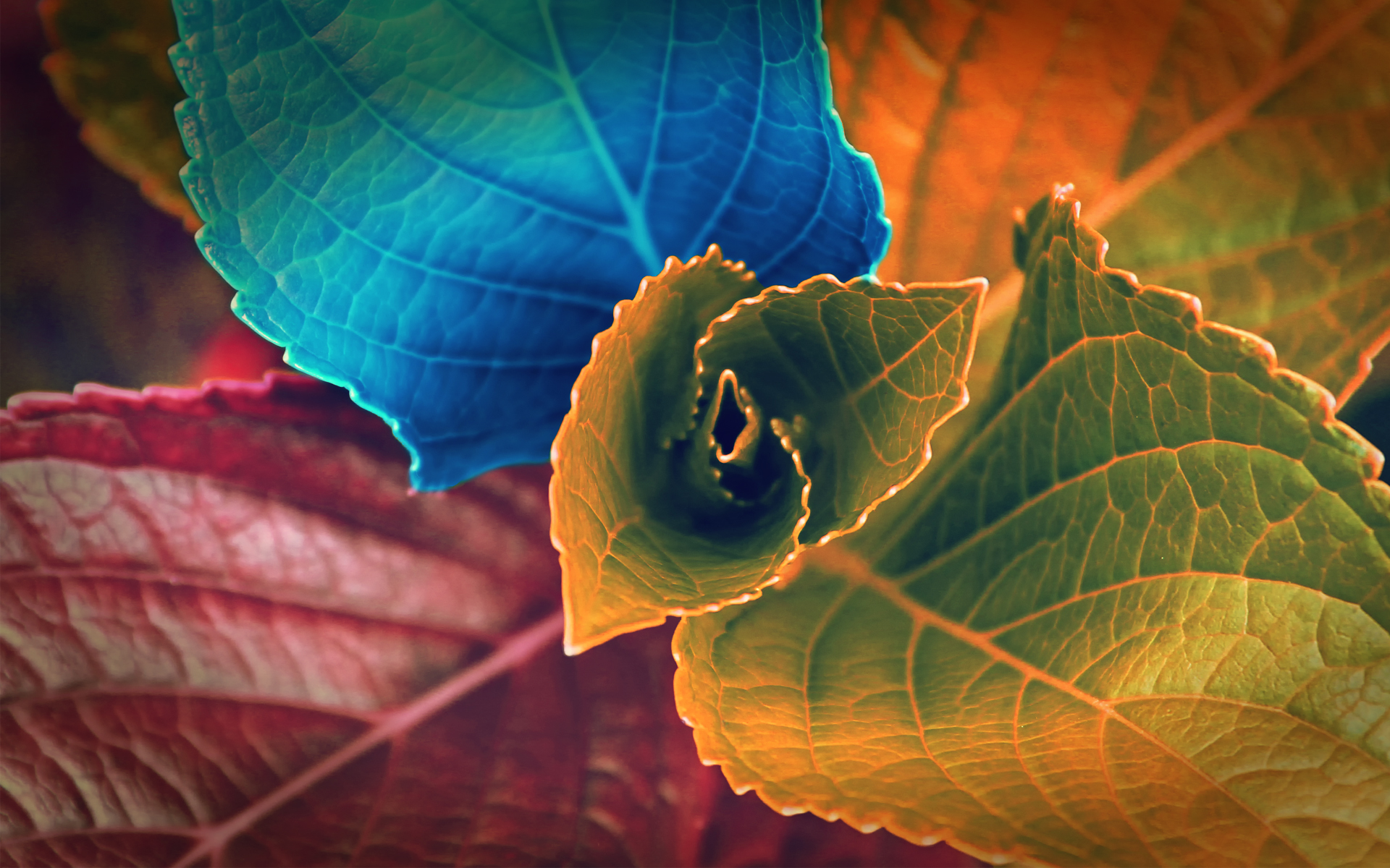 colors of leaves hd wide