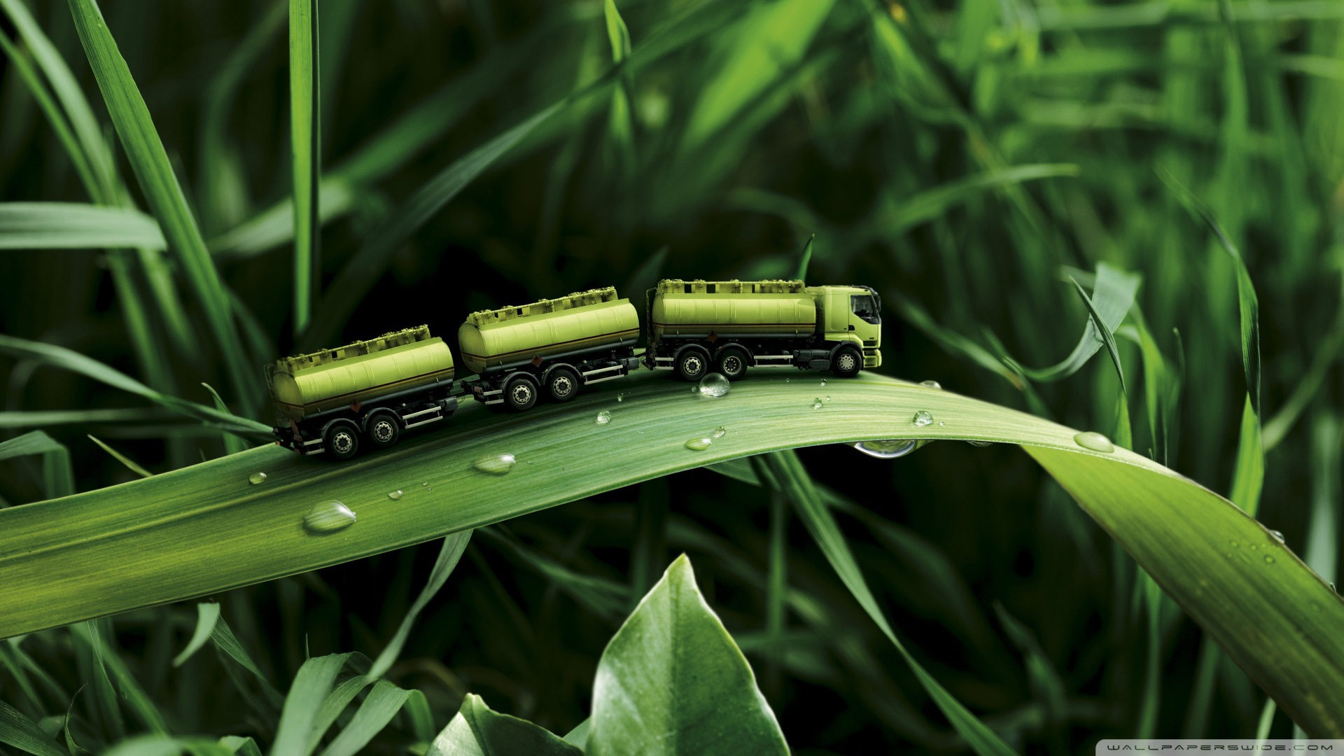 Green Truck On A Leaf Wallpaper Hd Wallpapers Hd Backgrounds Tumblr Backgrounds Images Pictures