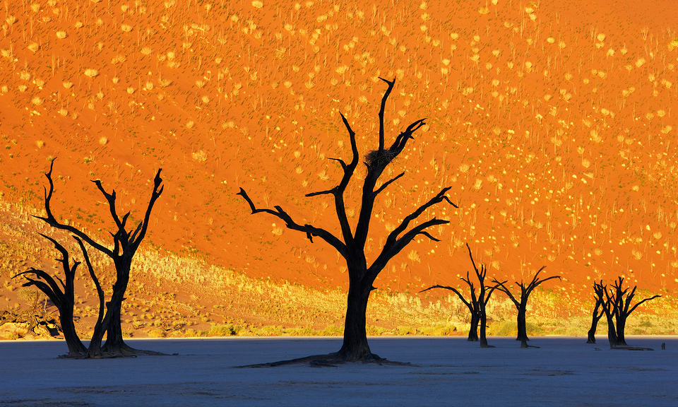this is not a painting dead trees park namibia