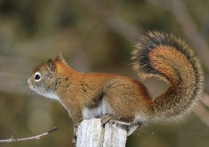 squirrel awesome images