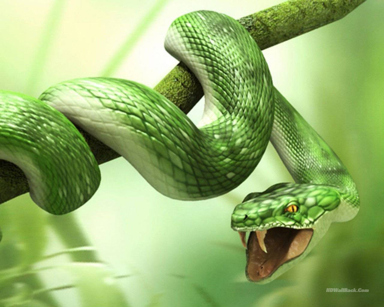 3D Snake Animals Wallpapers