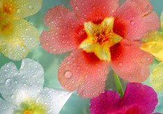 flower wallpaper rain