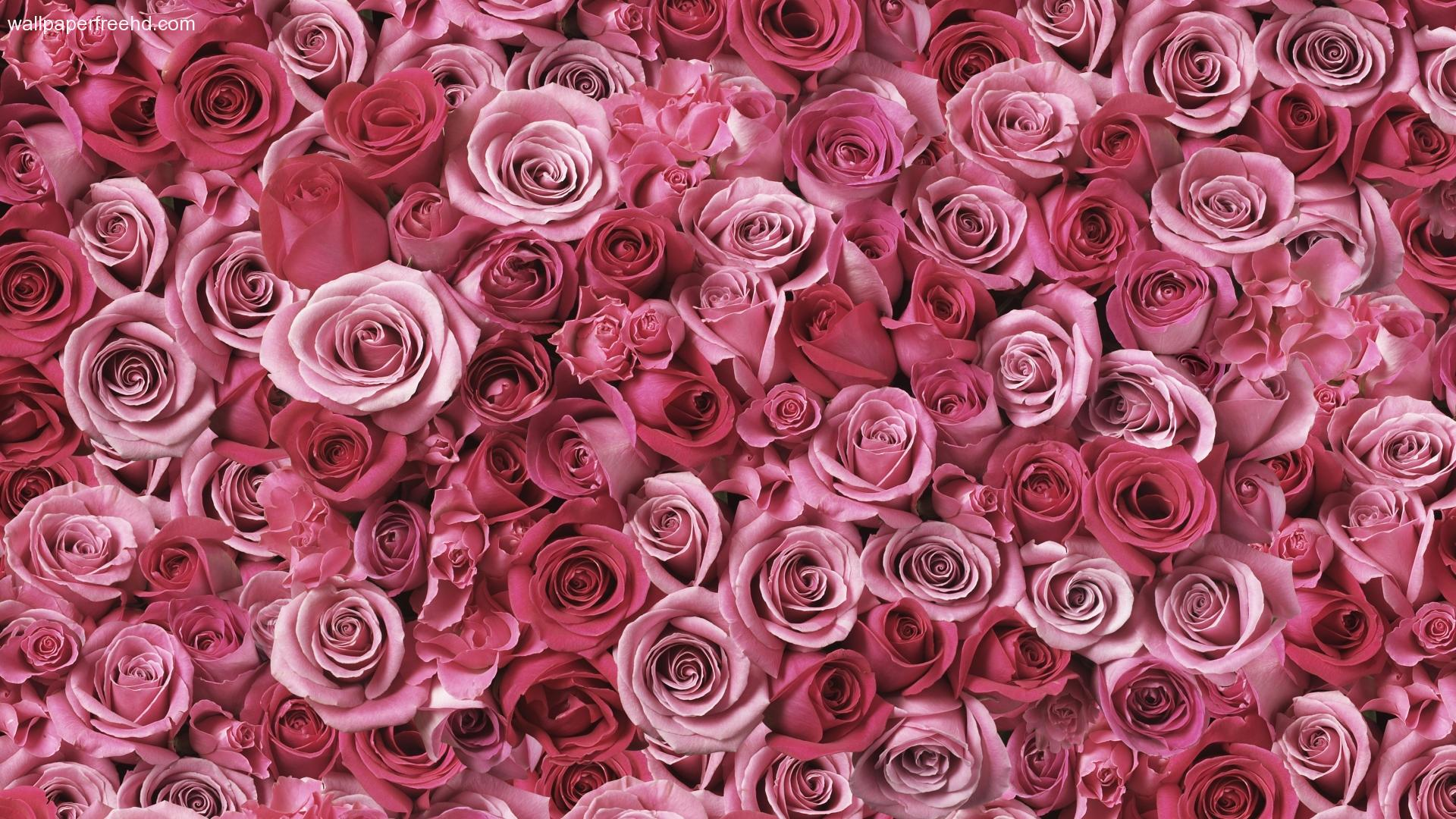 Abstract Blue Blocks Background Pink Roses Free