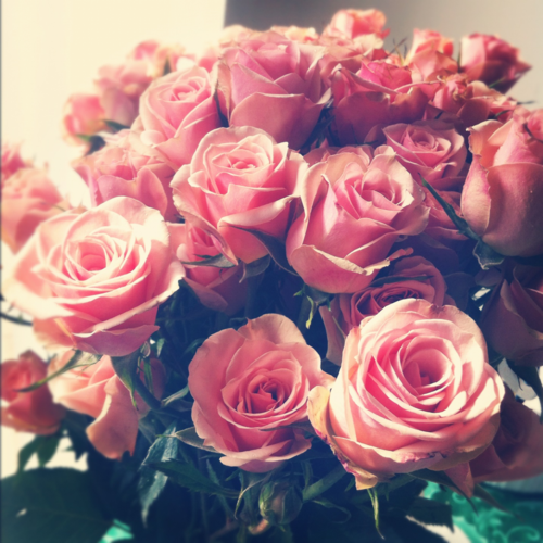 pink roses tumblr hd | HD Wallpapers , HD Backgrounds ...