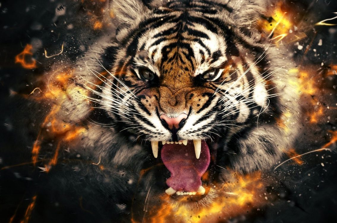 Must see Wallpaper Mobile Tiger - 3D-4k-Tiger-Wallpaper-1134x750  Photograph_4590100.jpg