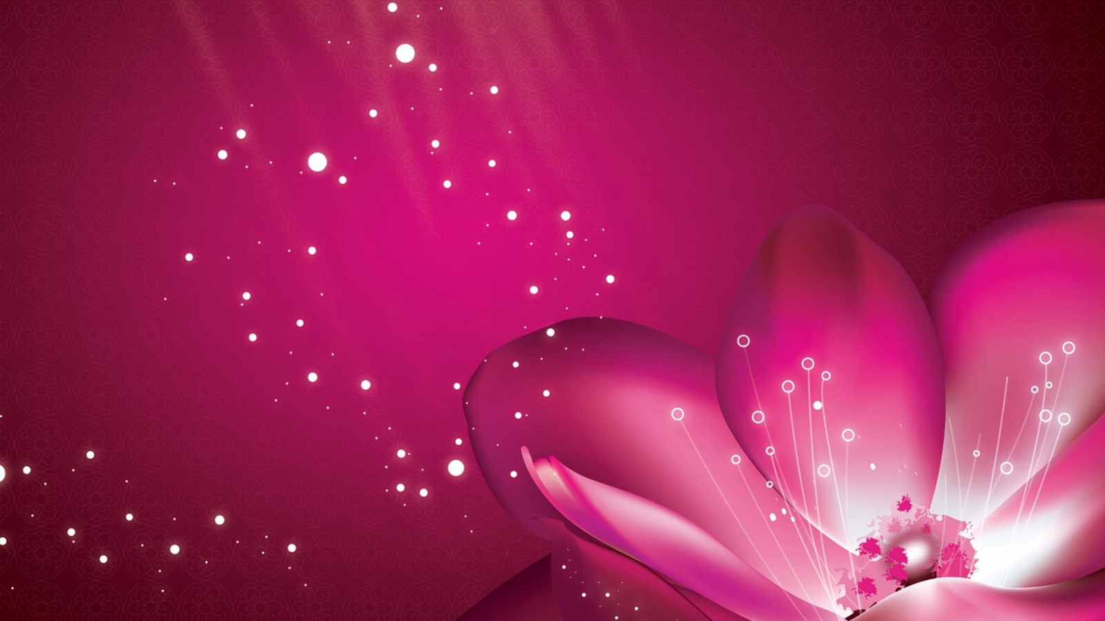 Flower Pink Petals Pink Background Ultra Hd Wallpapers