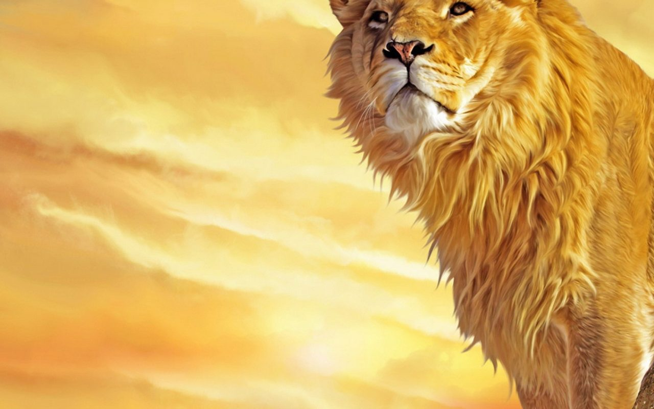 Lion Hd Wallpapers Backgrounds Wallpaper 1920 1080 Picture: HD Wallpapers , HD Backgrounds