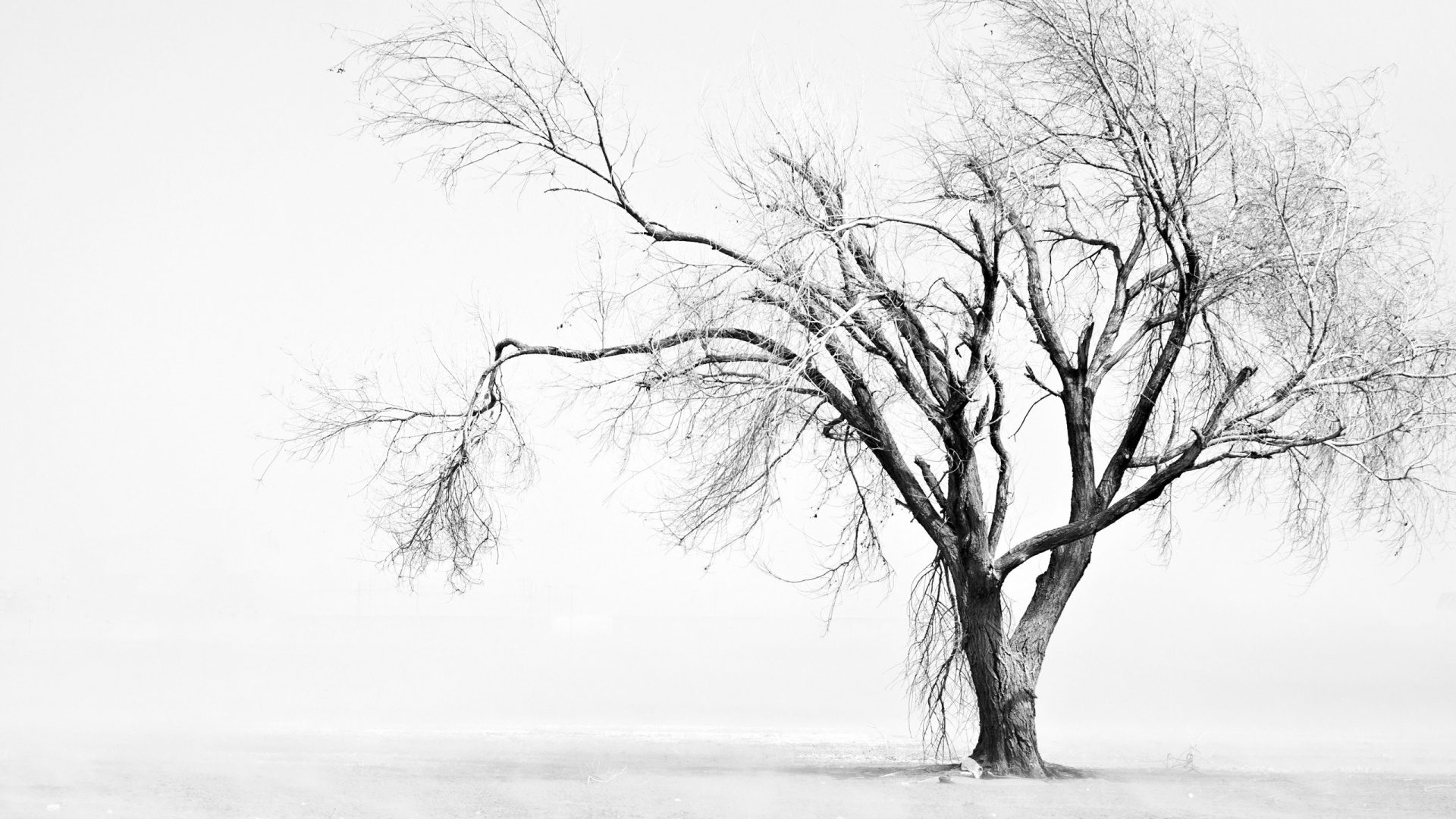 Sad white wallpaper 1920 1080 hd wallpapers hd - Download white background hd ...