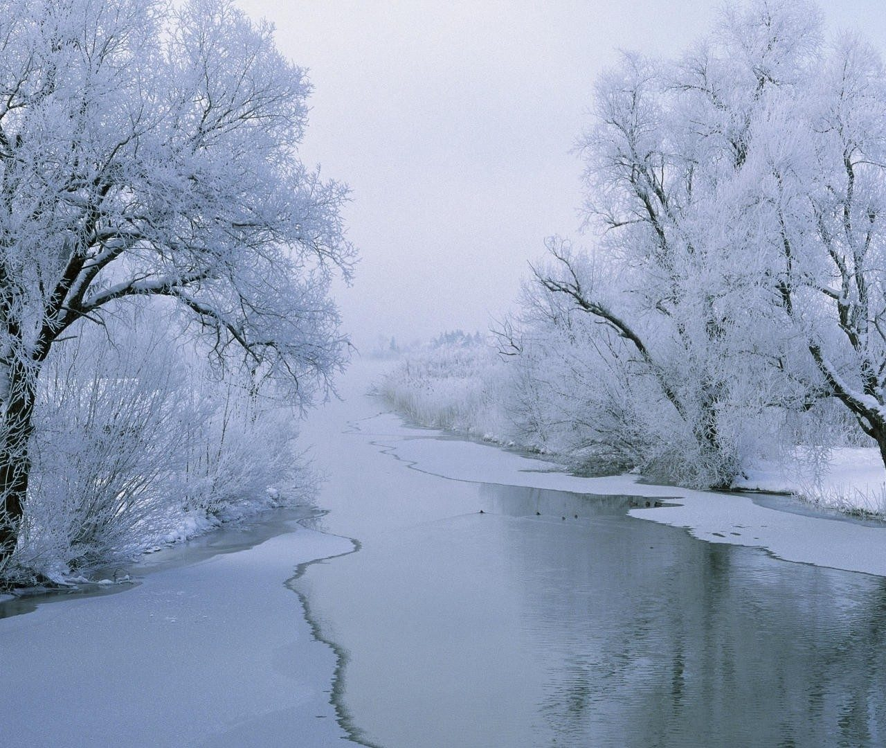 Hd 1600x900 Wallpaper: Winter Widescreen Wallpaper 1920×1080