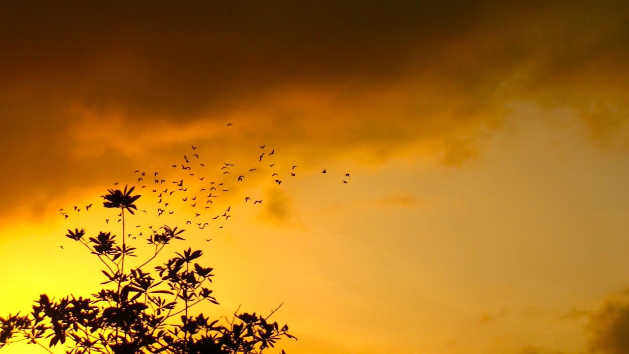 beautiful nature sunset and birds figure background | HD ...