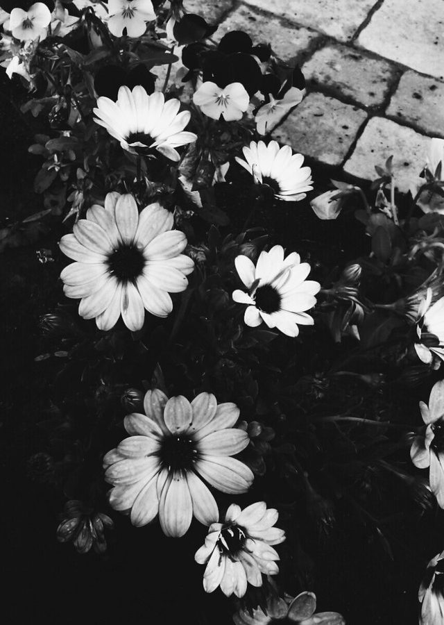 Imagenes Tumblr Flowers Hd Wallpapers Hd Backgrounds
