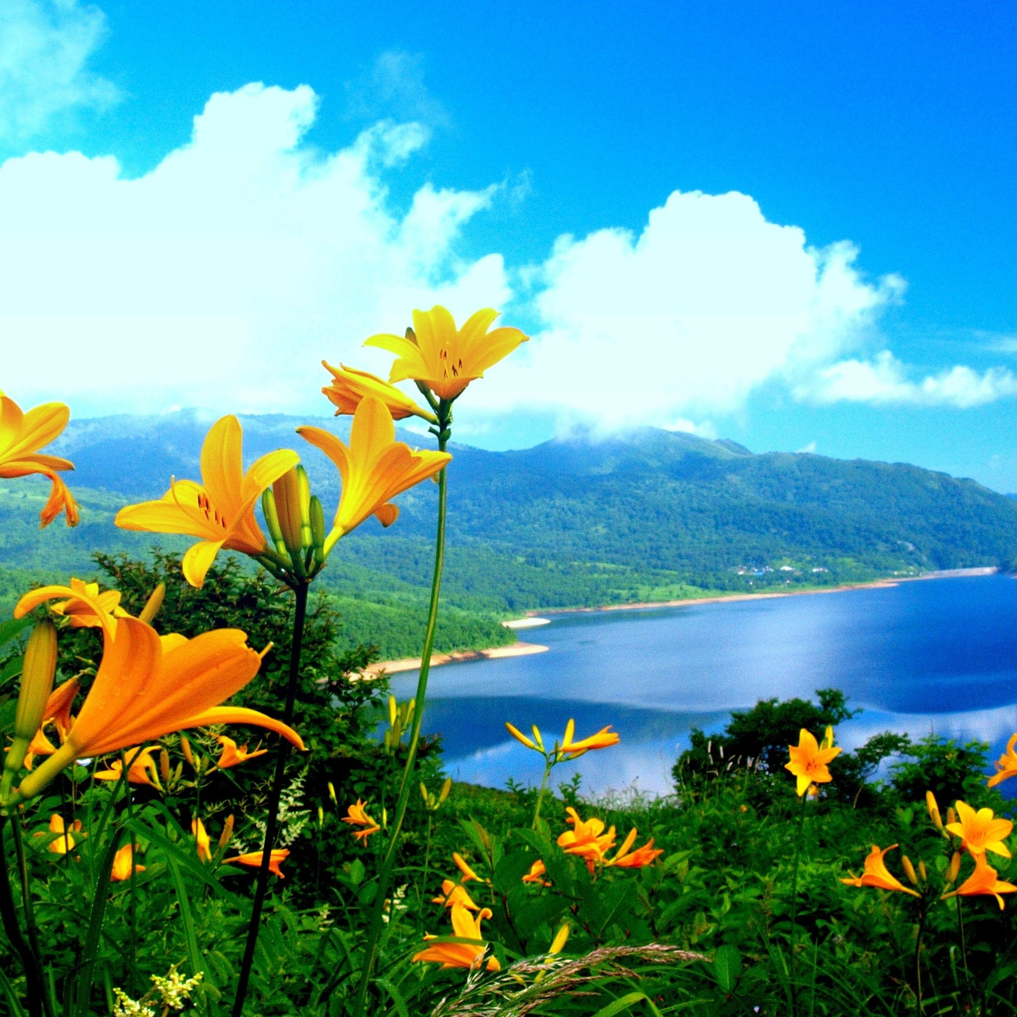 Beautiful Nature Hd Picture Download: Beautiful Nature Wallpapers