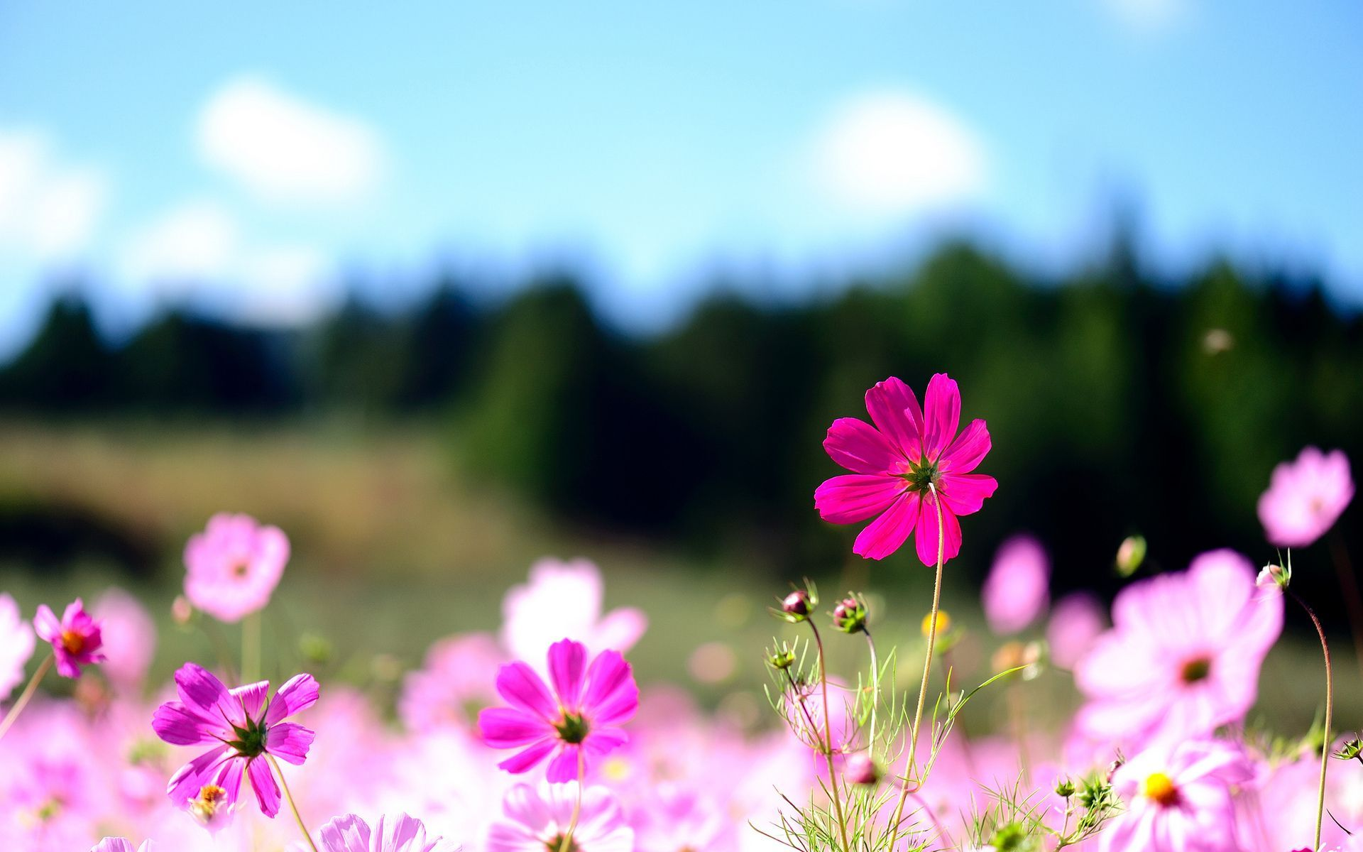 Flower Desktop Background Hd Wallpapers Hd Backgrounds Tumblr