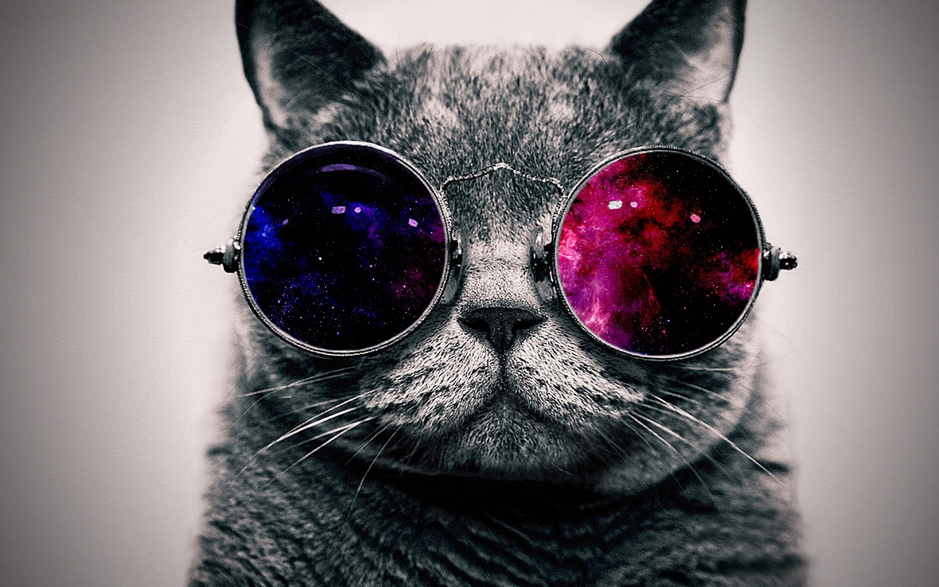 high definition amazing cat glasses thick