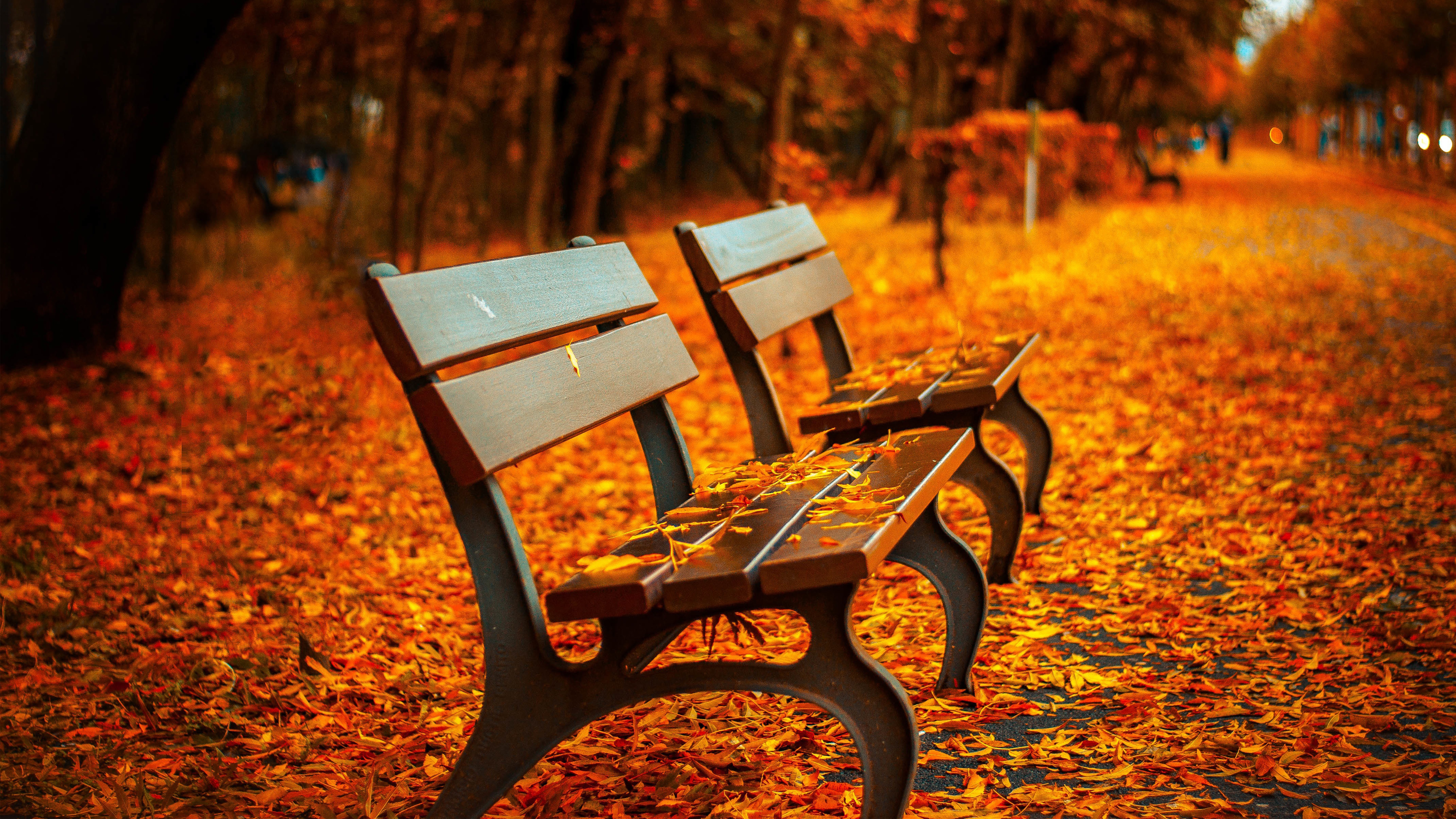 Autumn Bench Wallpapers HD Images Nature