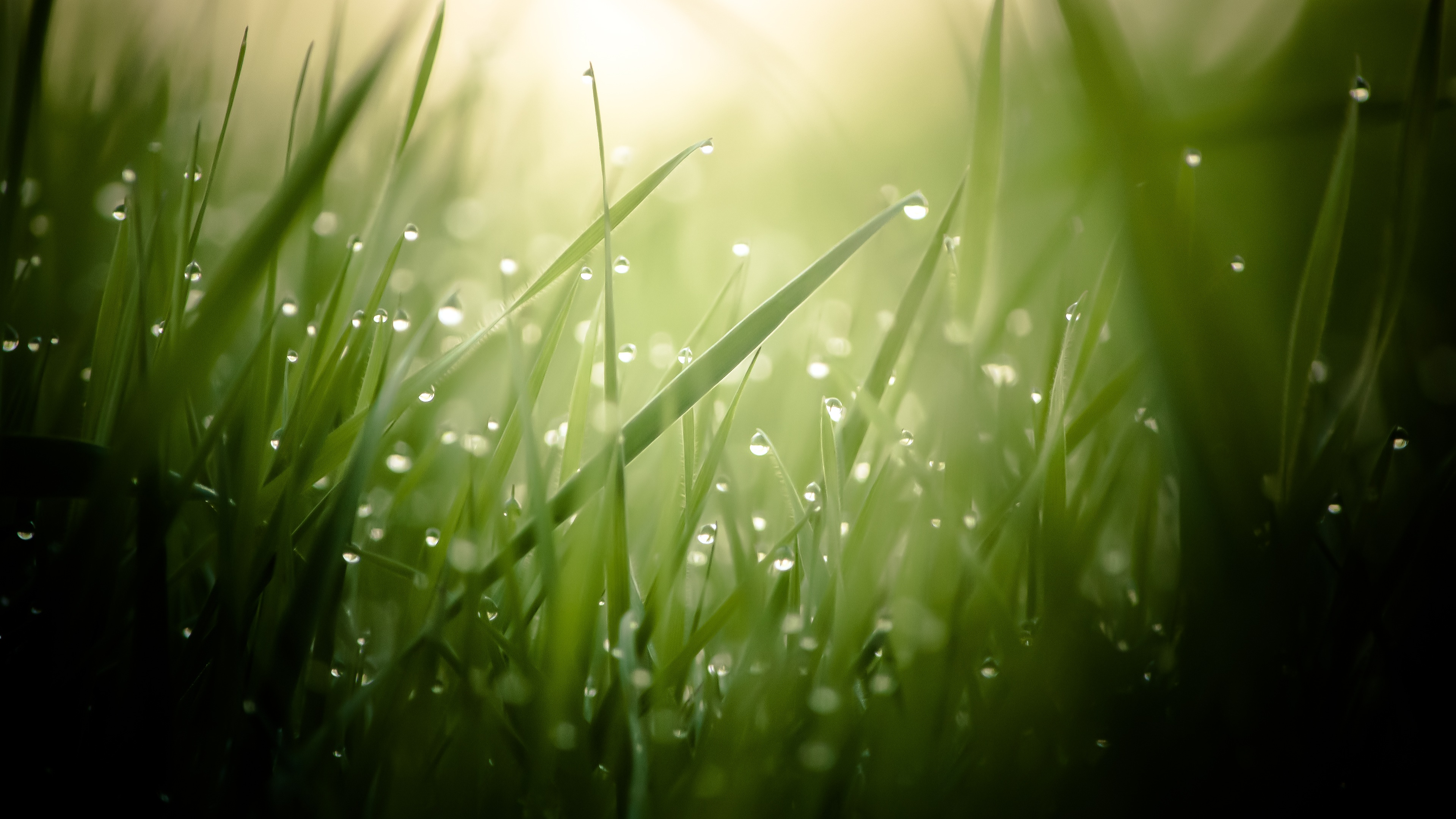 Morning Dew On Grass Threads 4K Ultra HD Desktop Wallpaper